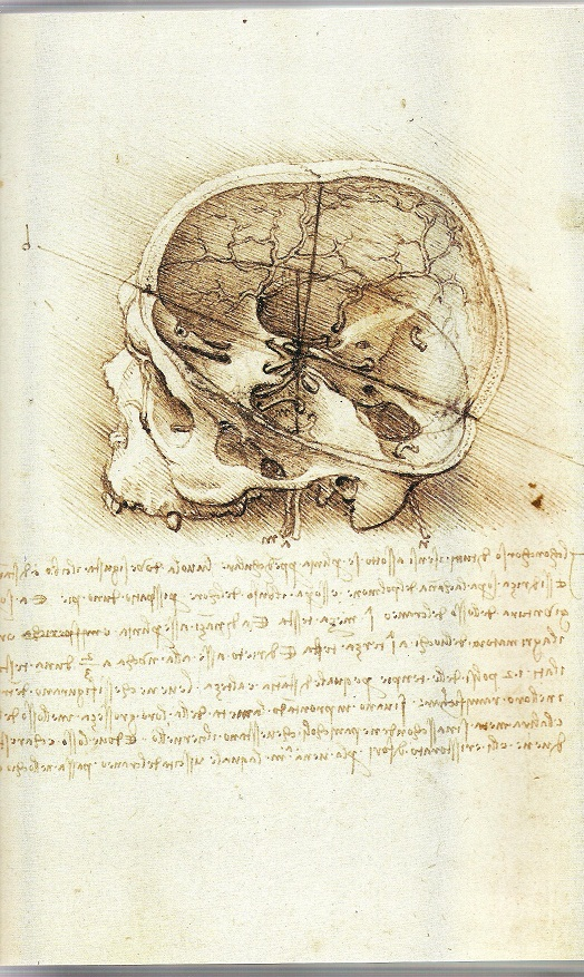 skull-section-leonardo-001.jpg