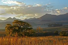 Freestate Landscape