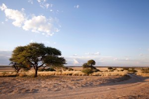 Botswana-typical landscape
