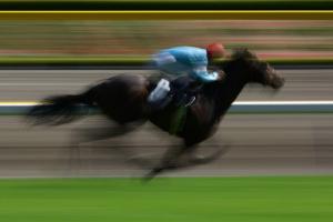 racing-horse